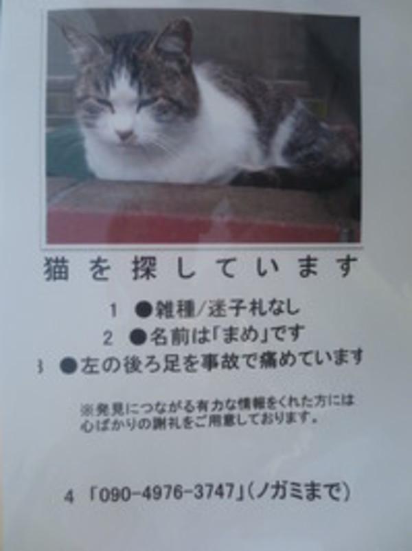 迷子になった猫ちゃん探していますサムネイル